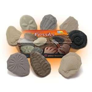 Fossils Hunt