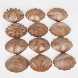 Eco-Friendly Tactile Shells