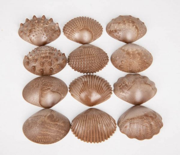 Eco-Friendly Tactile Shells 36 Pack