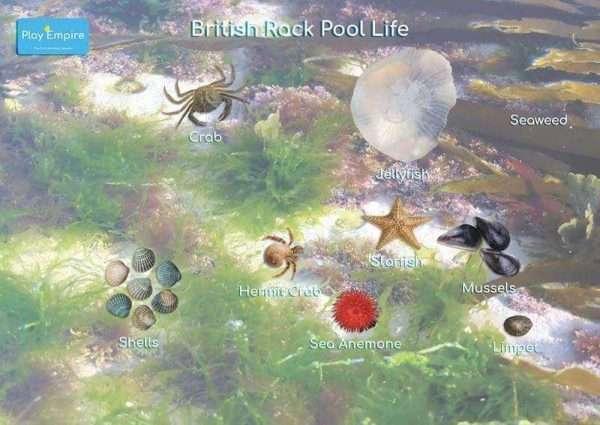 Rock Pool Poster
