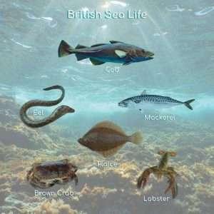 British Sea Life Poster