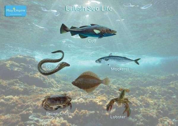 Sea Life Bumper Set