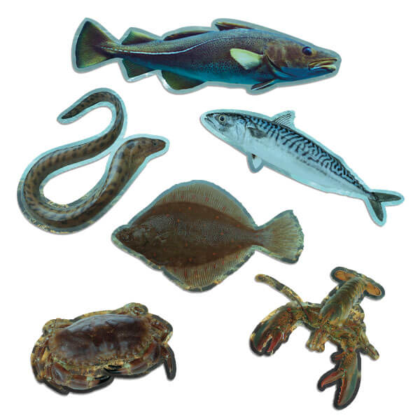 Sea Life Shapes