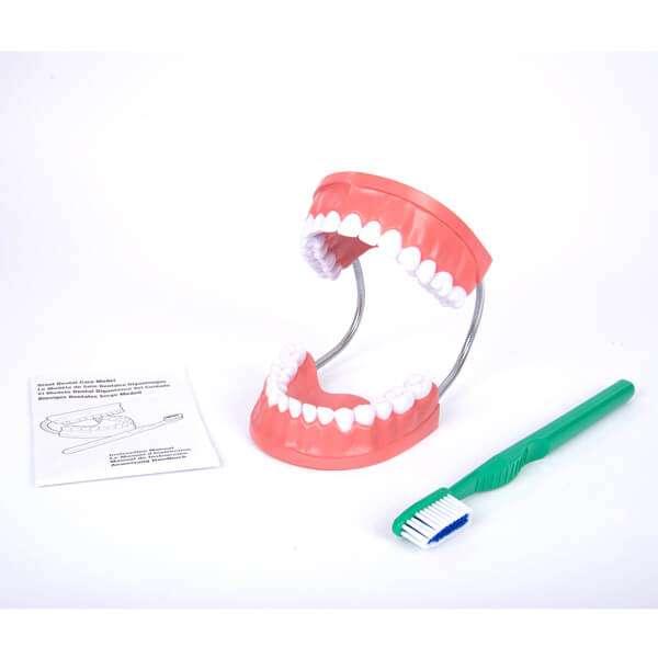 Giant Dental Care Model